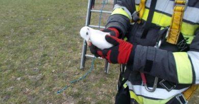 Konińscy strażacy uratowali mewę