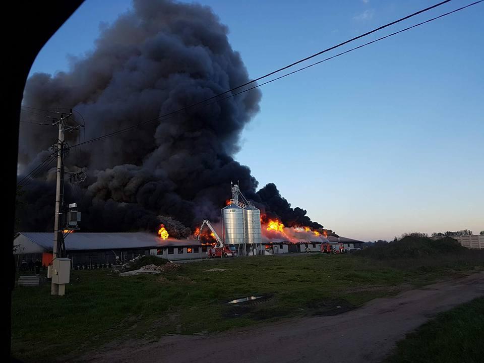 Uwaga ! Olbrzymi pożar świniarni. Prawdopodobnie spłonęło 4500 zwierząt. Na miejscu 16 zastępów straży pożarnej.