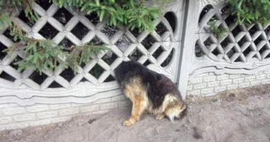 Pies uwięziony w ogrodowym ogrodzeniu ! Na miejscu niezawodni strażacy !