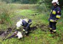 Akcja ratowania psa na bagnie