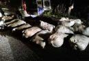 Ukradli 840 kilogramów ryb. Odpowiedzą za kradzież i znęcanie się nad zwierzętami.