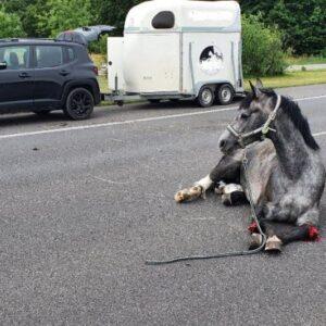 Koń zablokował Autostradę A2